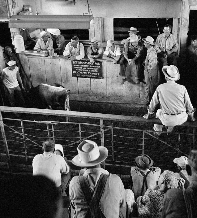 fifties_cattle_auction