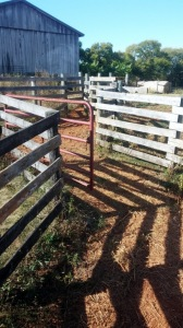 "Most working facilities start with a series of pens and gate, sometimes leading to ""tubs"" or ""sweeps"" depending on their configuration. These shadows can cause problems with some cattle though, so you have to take that into account."